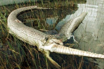 Crocodile Biggest The World Funniest Pictures